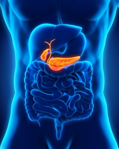 illustration of the pancreas in the body