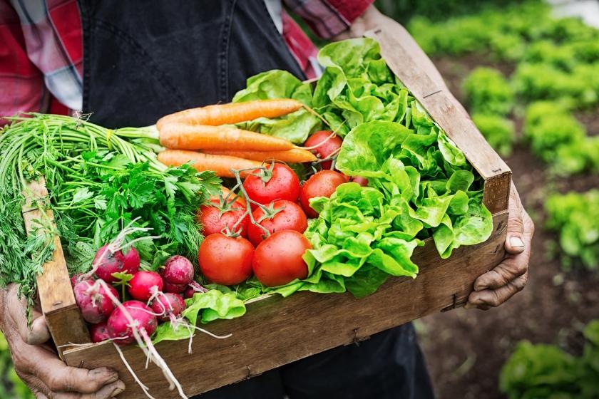Fresh picked vegetables