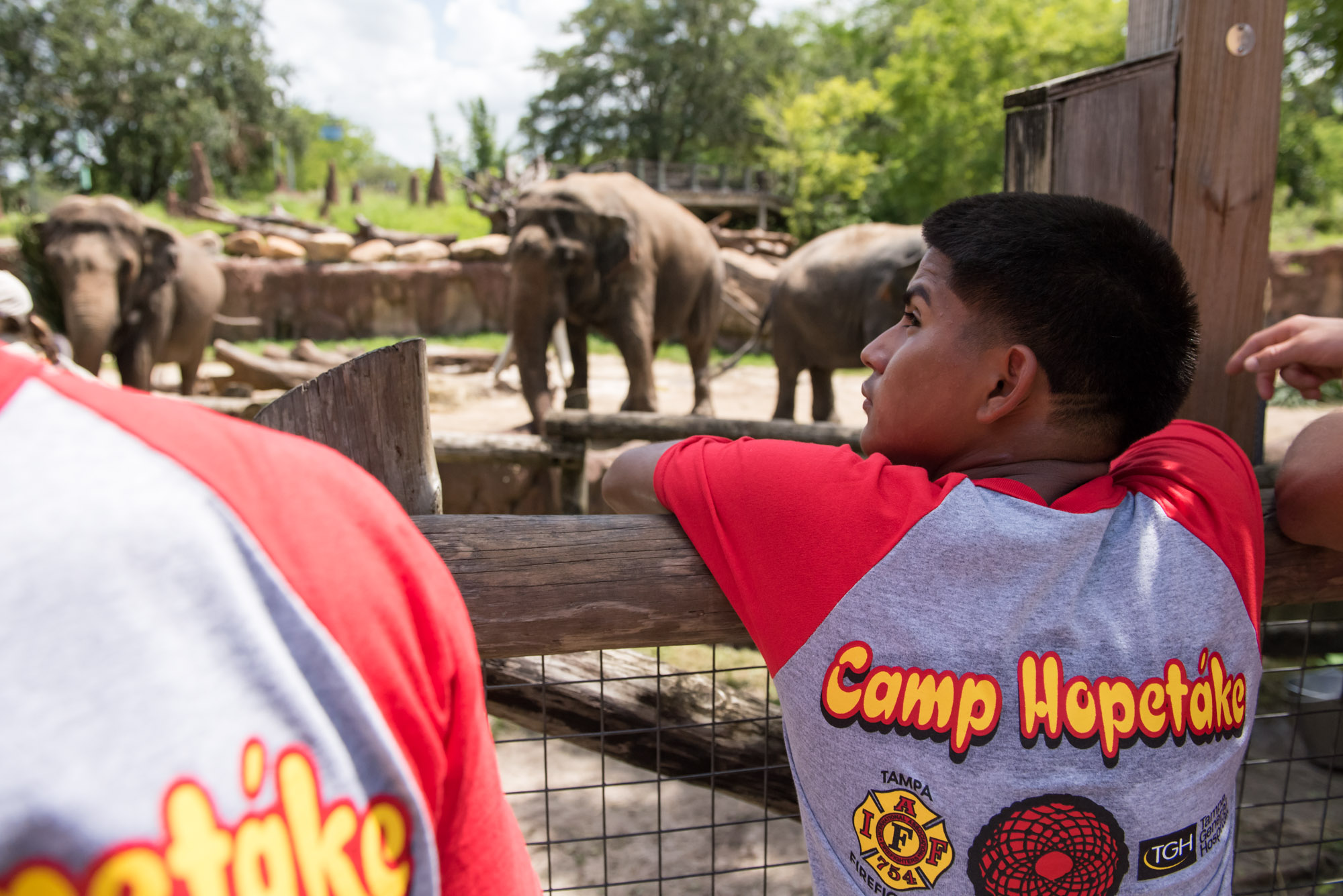 Group of boys looking at the elephants at Busch Gardens with Camp Hopetake