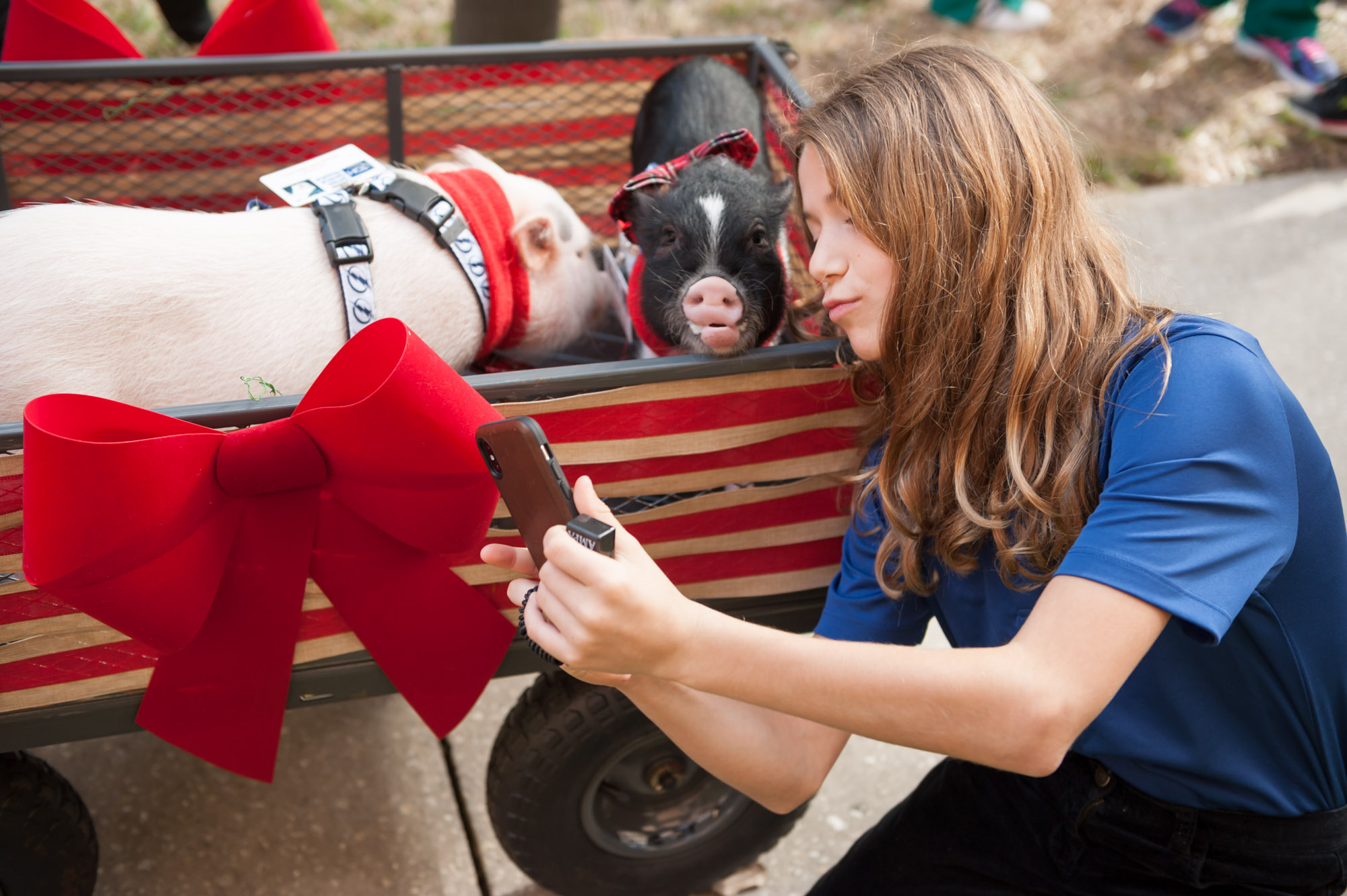 Girl taking a selfie with a therapy pig