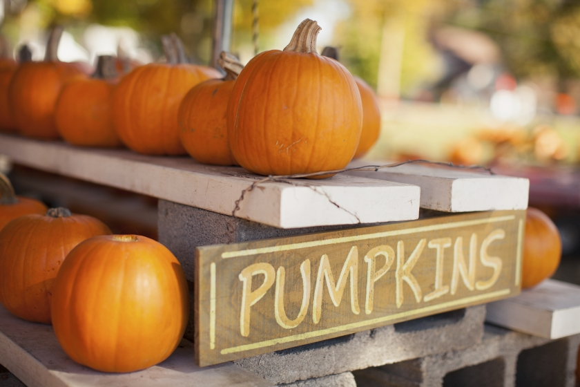 Image of pumpkins