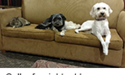 dog pets sitting on the couch
