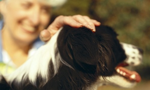 An elderly woman petting a dog