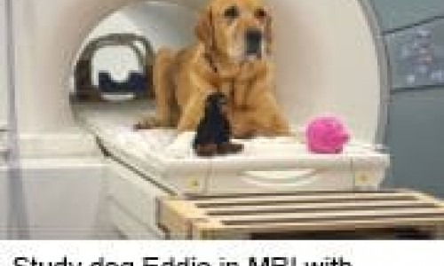 Study dog Eddie in MRI with 'Monkey' and 'Piggy'