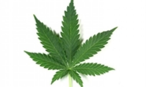 An image of a marijuana leaf