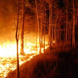 Wildfire in the woods